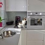 kuchnia-kuchnia-styl-nowoczesny-wyposarzenie