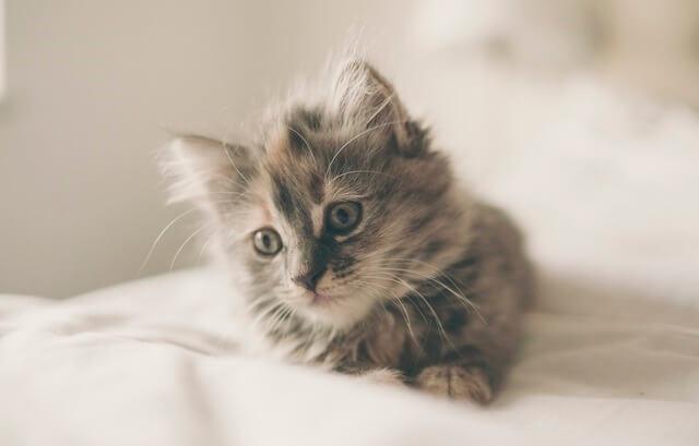 Jak karmić małego kota?