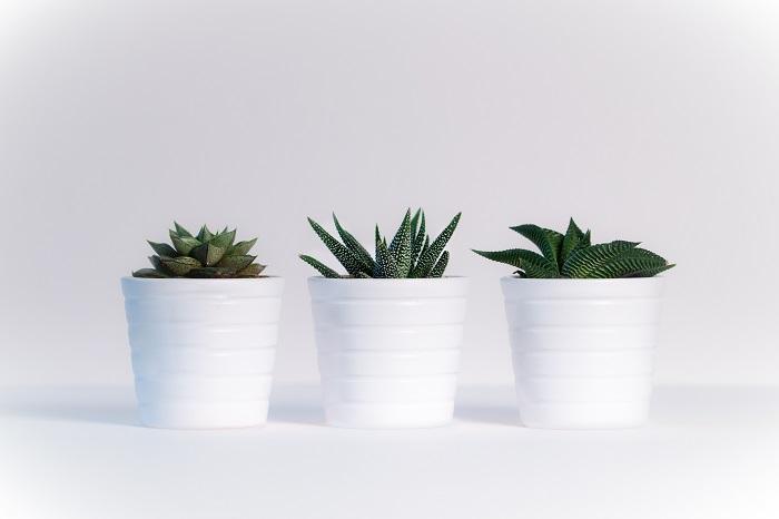 Rośliny doniczkowe – które wybrać do domu?